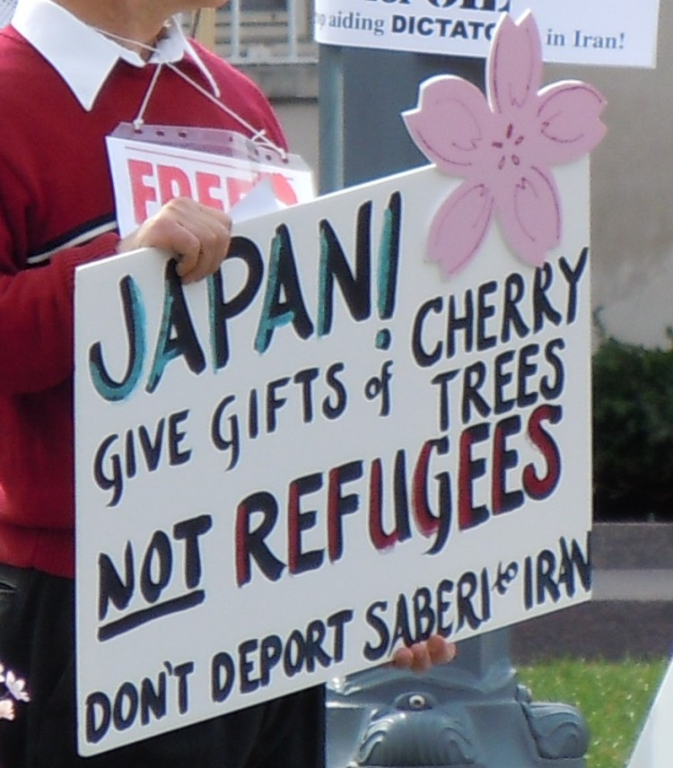 cherry trees, not refugees